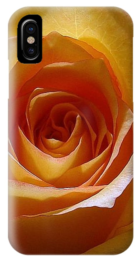Rose Yellow IPhone Case featuring the photograph Yellow Rose by Luciana Seymour