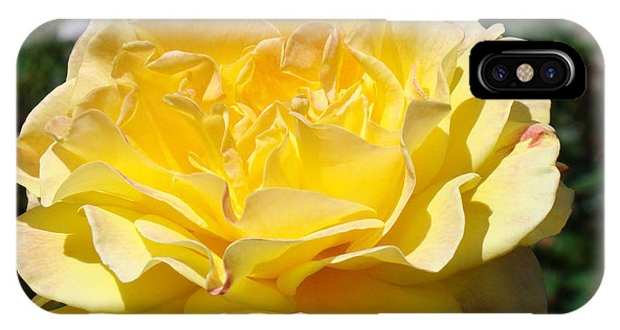 Rose IPhone X Case featuring the photograph Yellow Rose Sunlit Summer Roses Flowers Art Prints Baslee Troutman by Baslee Troutman