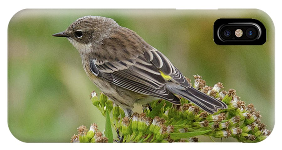 Warbler IPhone X Case featuring the photograph Yellow Rumped Warbler by Judd Nathan