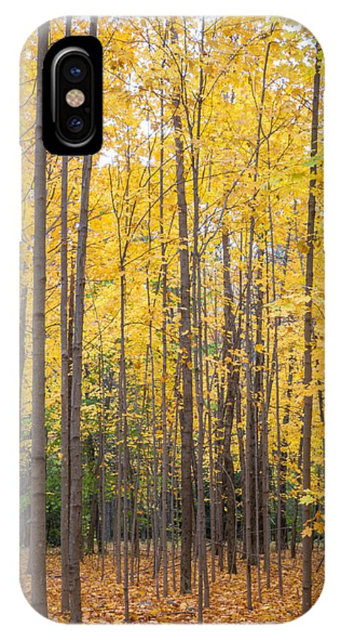 Yellow Maples IPhone X Case featuring the photograph Yellow Saplings by Diane Moore