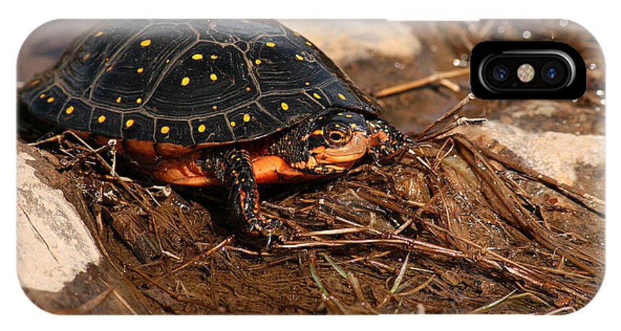 Turlte IPhone X Case featuring the photograph Yellow-spotted Turtle Crawling Through Wetland by Max Allen