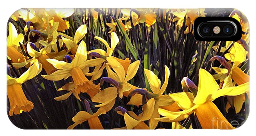 Yellow IPhone X Case featuring the photograph Yellow Spring Daffodils by Melissa Stephenson
