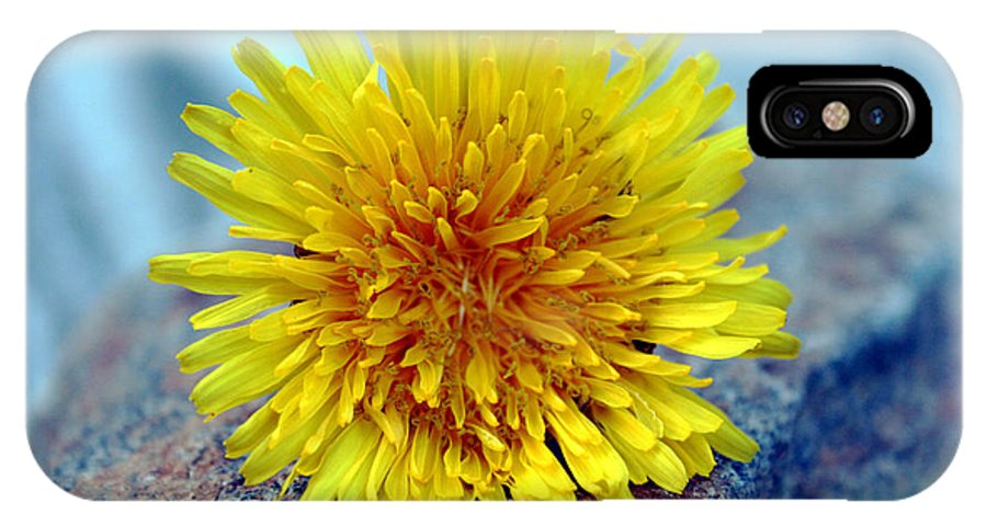 Flower Wild Nature Yellow Rock Blue Spring Macro Close Up IPhone Case featuring the photograph Yellow Spring by Linda Sannuti