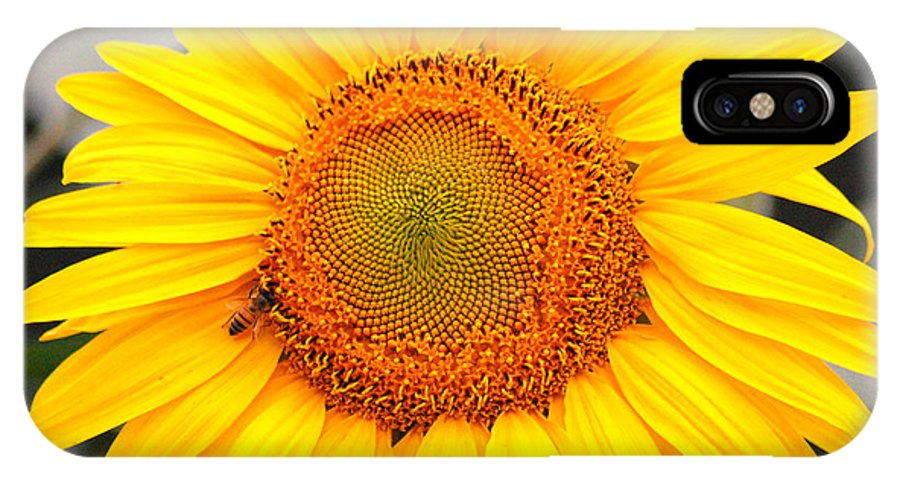 Sunflower IPhone X Case featuring the photograph Yellow Sunflower With Bee by Amy Fose