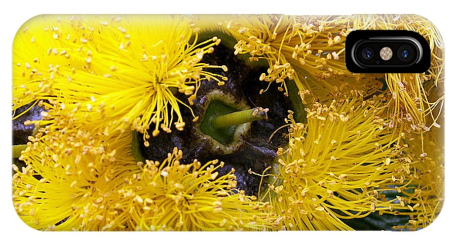 Flower IPhone X Case featuring the photograph Yellow Tree Flower by Amy Fose