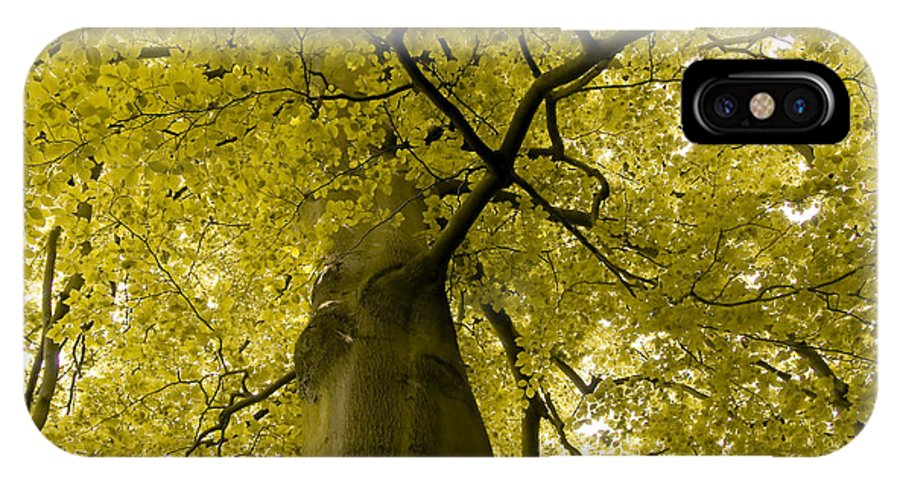 Countryside IPhone X Case featuring the photograph Yellow Tree by Svetlana Sewell