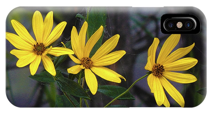 Summer IPhone X Case featuring the photograph Yellow Trined by Wild Thing