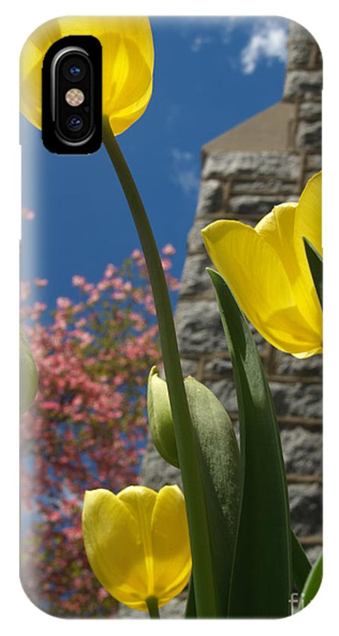 Flower IPhone Case featuring the photograph Yellow Tulips By Stone Church by Anna Lisa Yoder