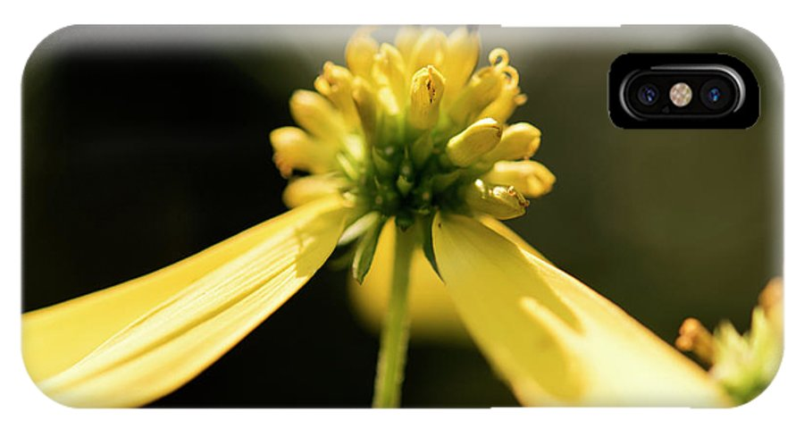 Yellow Flower IPhone X Case featuring the photograph Yellow Wildflower by Michelle Himes