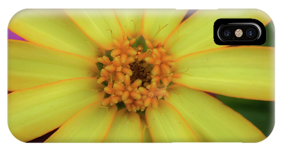 Yellow Flower IPhone X Case featuring the photograph Yellow Zinn by Kelly Foreman