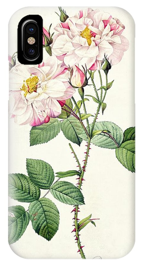 Rosa IPhone X Case featuring the drawing York And Lancaster Rose by Pierre Joseph Redoute