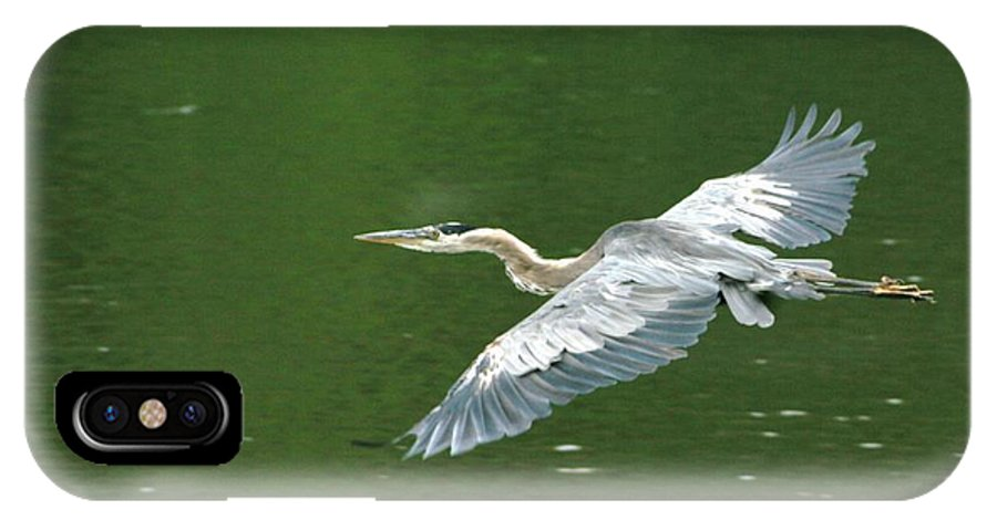 Landscape Nature Wildlife Bird Crane Heron Green Flight Ohio Water IPhone X Case featuring the photograph Young Great Blue Heron Taking Flight by Dawn Downour