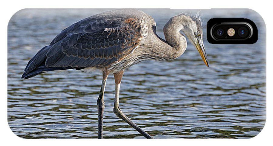 Young Heron IPhone X Case featuring the photograph Young Heron by Sue Harper