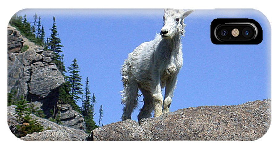 Wildlife IPhone X Case featuring the photograph Young Mountain Goat by Art Berggreen