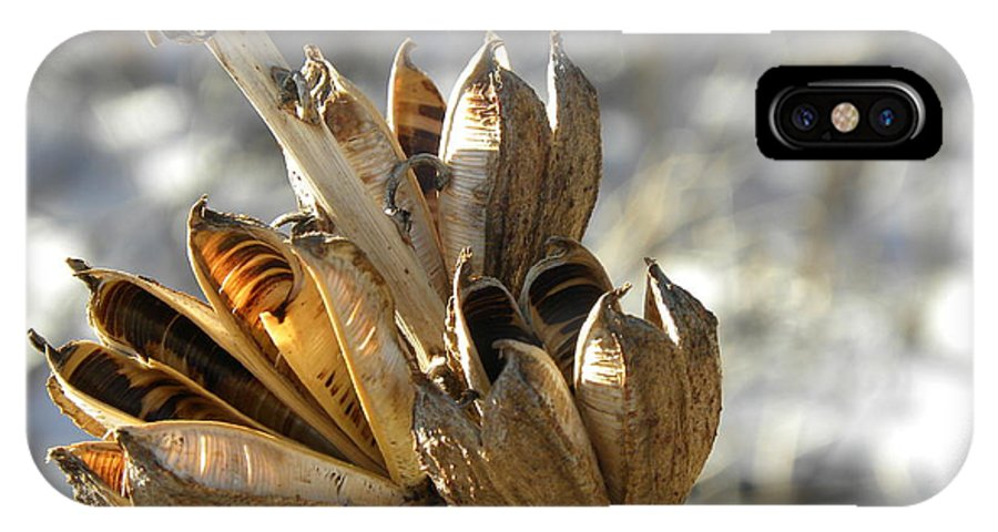 Colorado IPhone X Case featuring the photograph Yucca Pods by CL Redding