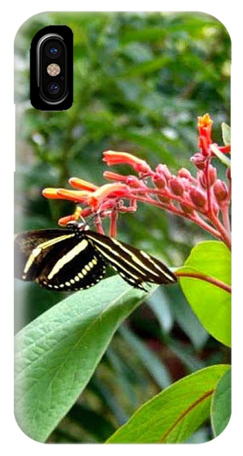 Sos Art Gallery IPhone X Case featuring the photograph Zebra Butterfly by SOS Art Gallery