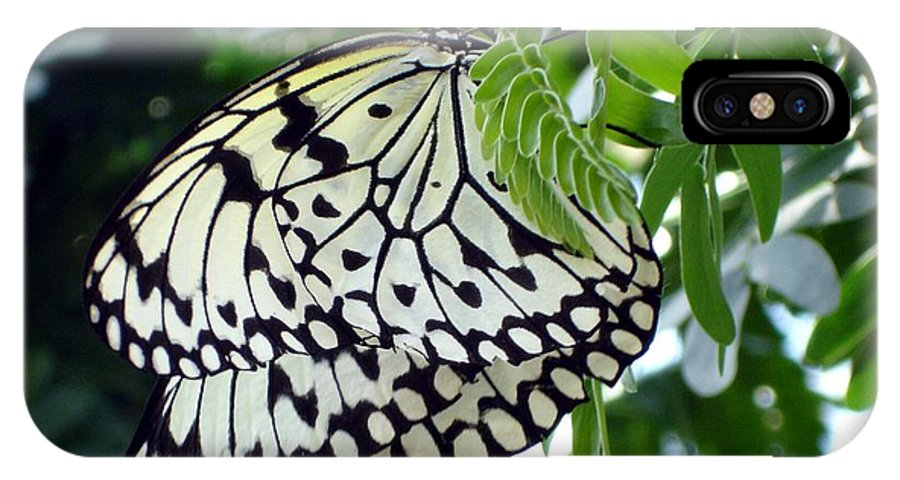 Butterfly IPhone X Case featuring the photograph Zebra In Disguise by Shelley Jones