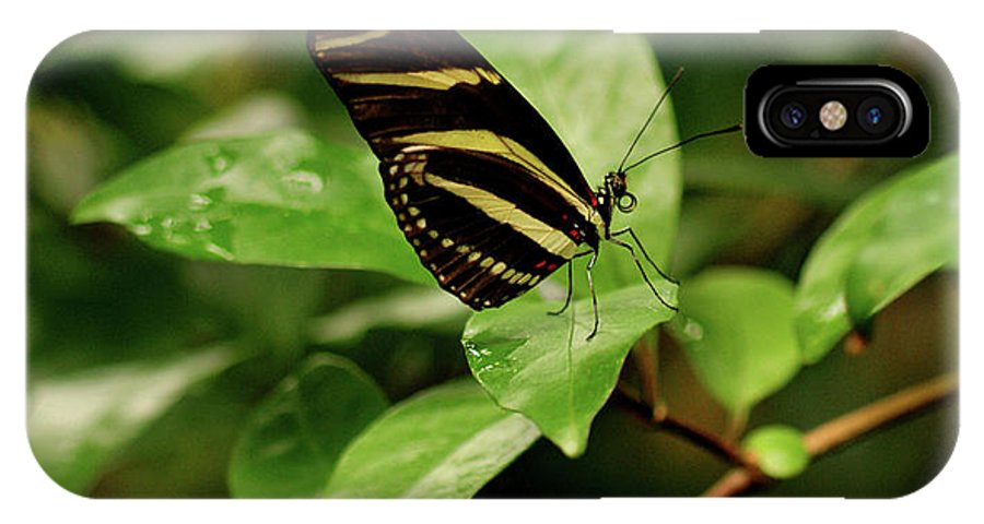Butterfly IPhone X Case featuring the photograph Zebra Longwing Butterfly by Sandy Keeton