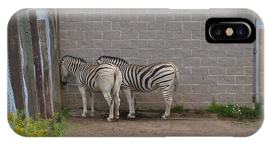 Zoo IPhone Case featuring the photograph Zebras by Melissa Parks