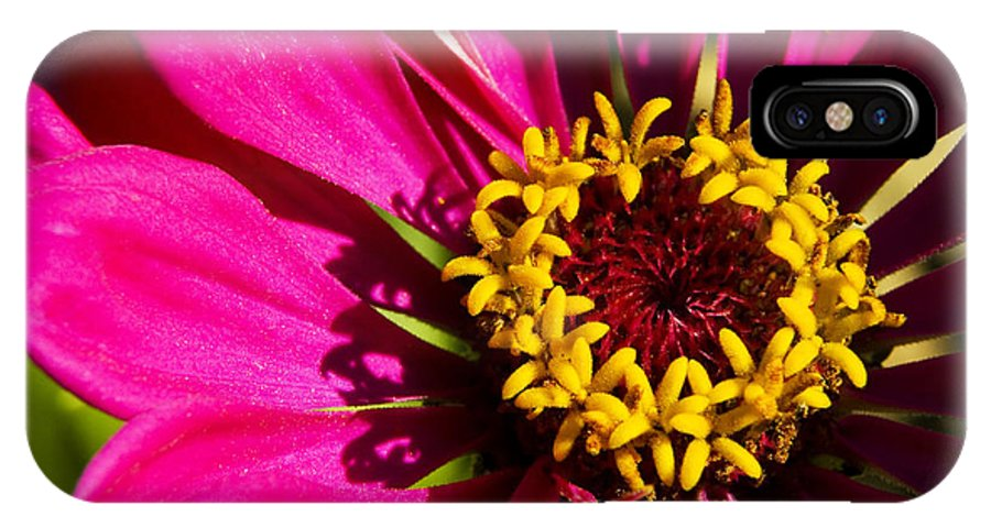 Zinnia IPhone X Case featuring the photograph Zinnia In Evening Light by Thomas R Fletcher
