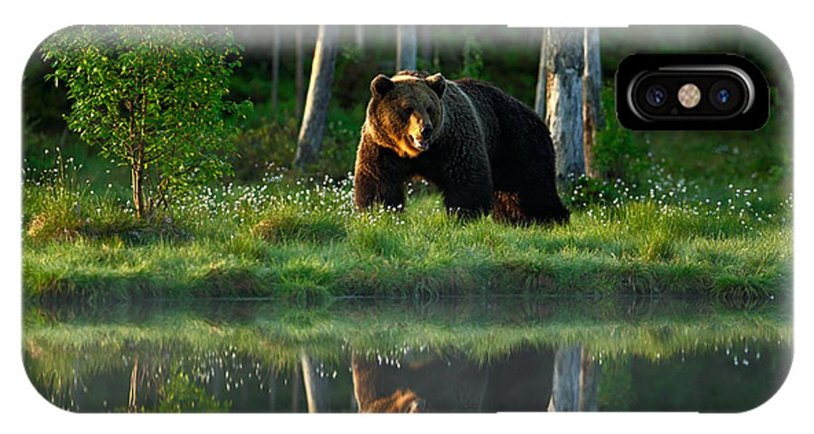 Big IPhone X Case featuring the photograph Big Brown Bear Walking Around Lake In by Ondrej Prosicky