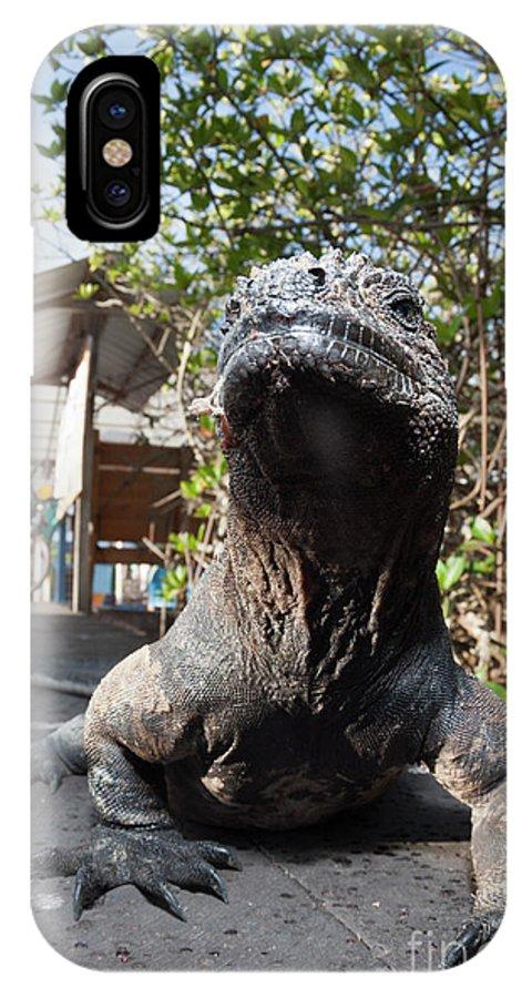 Marine Iguana IPhone X Case featuring the photograph Marine Iguana 1 by Reinhard Dirscherl/science Photo Library