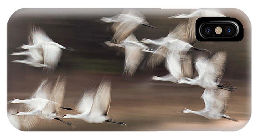 Abundance IPhone X Case featuring the photograph Motion Blur, Flock Of Sandhill Cranes by Adam Jones