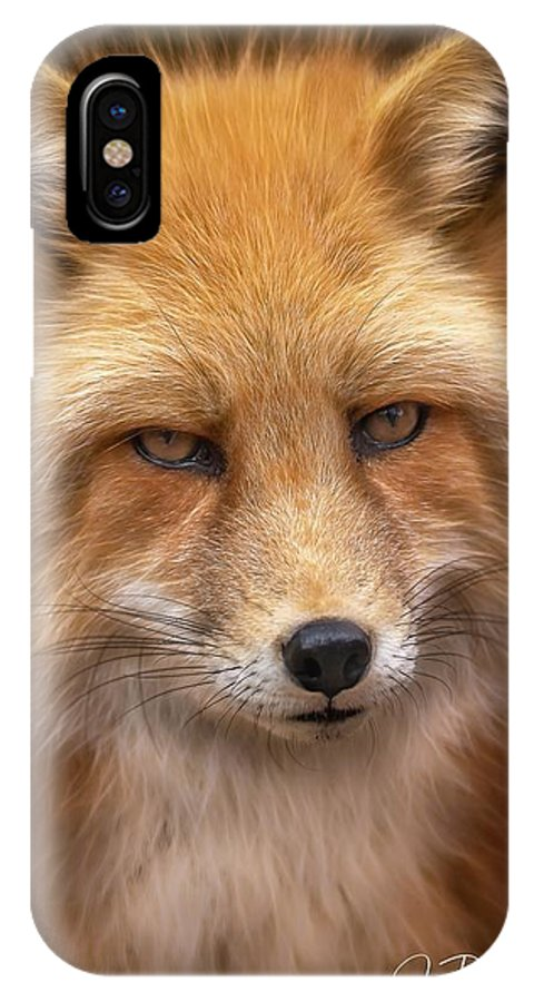 Russianredfox IPhone X Case featuring the photograph Russian Red Fox by David Pine