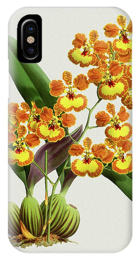 Vintage IPhone X Case featuring the drawing Orchid Vintage Print On Tinted Paperboard by Baptiste Posters