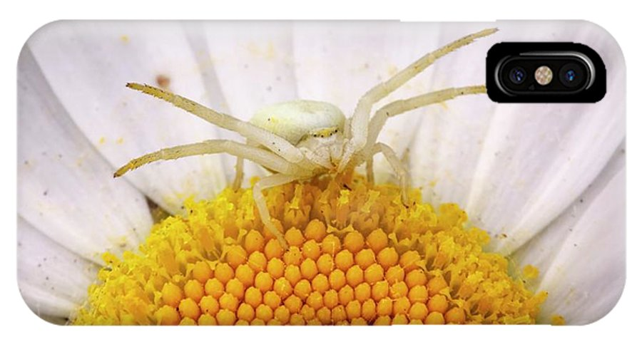 Arachnid IPhone X Case featuring the photograph Crab Spider 3 by Heath Mcdonald/science Photo Library