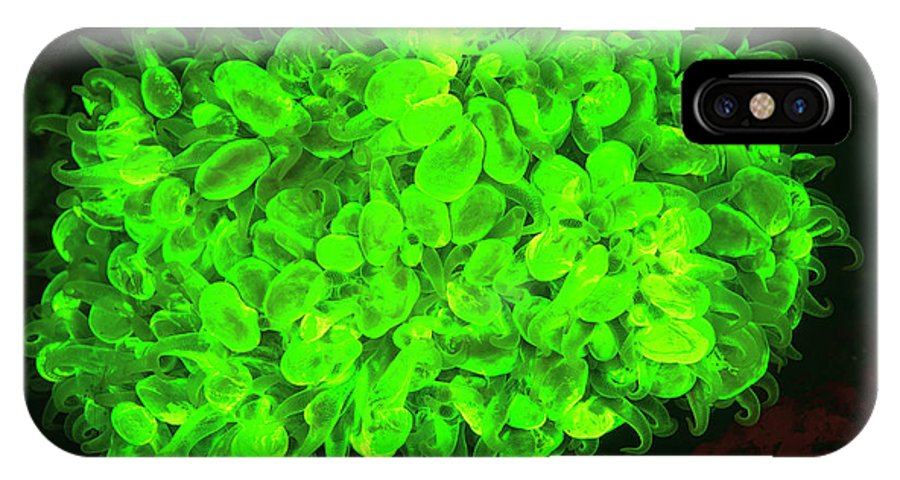 Asia IPhone X Case featuring the photograph Natural Occurring Fluorescence by Stuart Westmorland