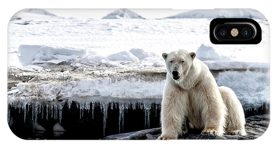 Polar IPhone X Case featuring the photograph Adult Male Polar Bear At The Ice Edge In Svalbard by Jane Rix