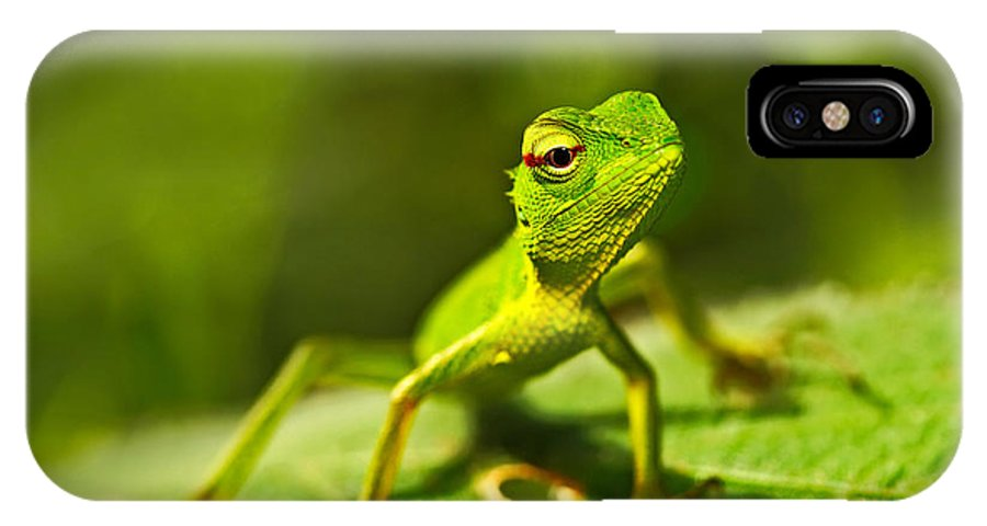 Small IPhone X Case featuring the photograph Beautiful Animal In The Nature Habitat by Ondrej Prosicky