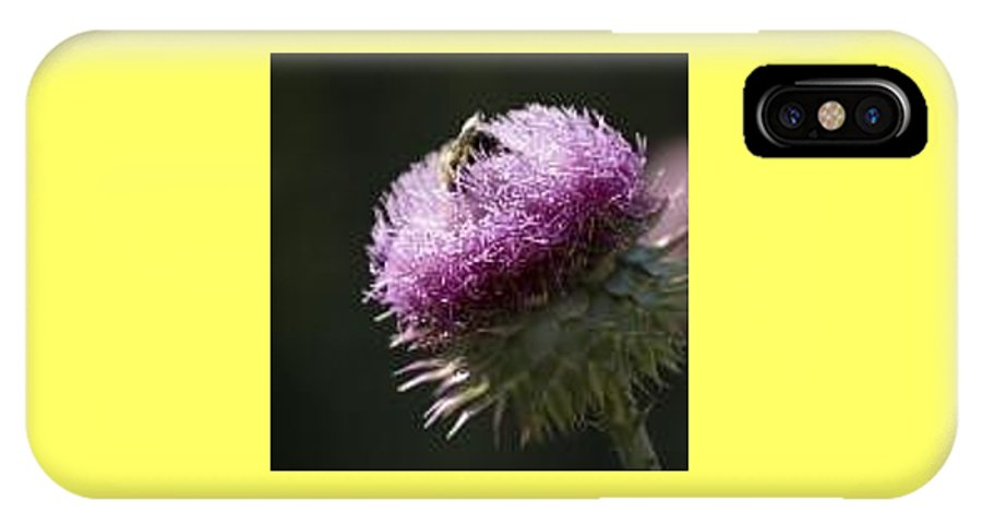 Bee IPhone X Case featuring the photograph Bee On Thistle by Nancy Ayanna Wyatt
