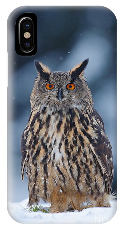 Big IPhone X Case featuring the photograph Big Eurasian Eagle Owl With Snowflakes by Ondrej Prosicky