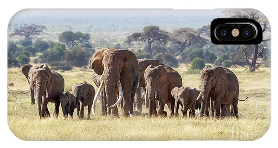 Elephant IPhone X Case featuring the photograph Bull Elephant With A Herd Of Females And Babies In Amboseli, Kenya by Jane Rix