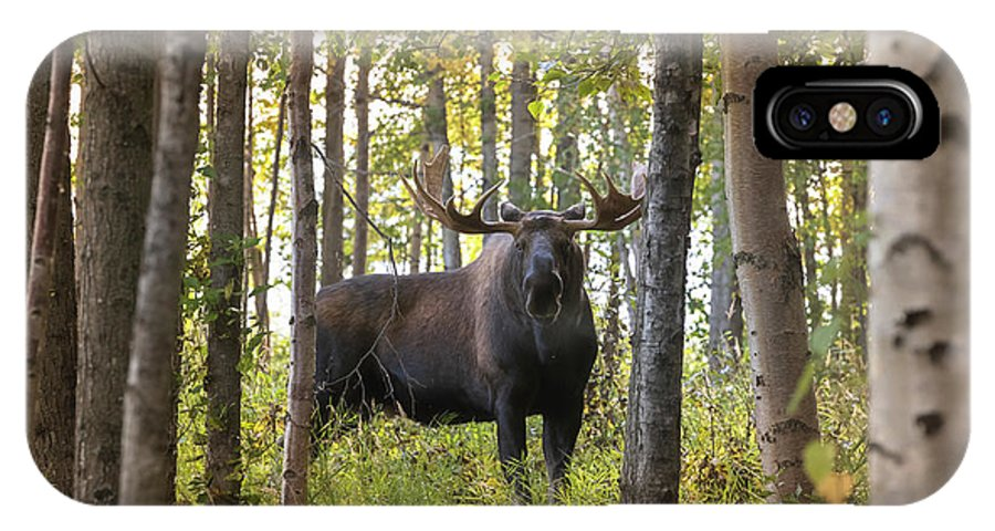 Alaska IPhone X Case featuring the photograph Bull Moose In Fall Forest by Scott Slone