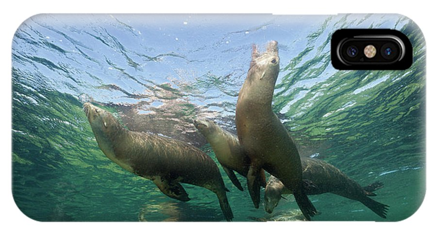 California Sea Lion IPhone X Case featuring the photograph California Sea Lion by Reinhard Dirscherl/science Photo Library