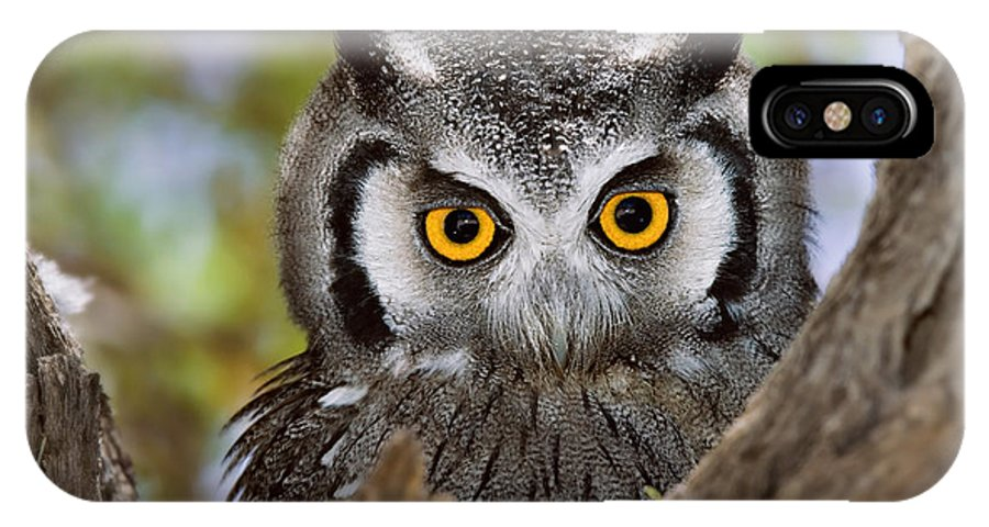 Big IPhone X Case featuring the photograph Close-up Of A Whitefaced Owl Otus by Johan Swanepoel