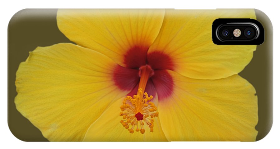 Yellow IPhone X Case featuring the photograph Cool Bloom by Charles Stuart