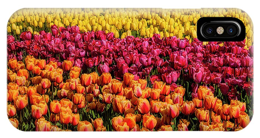 Tulip IPhone X Case featuring the photograph Dreaming Of Endless Colorful Tulips by Garry Gay