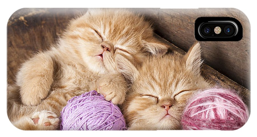 Fur IPhone X Case featuring the photograph Exotic Kittens  Sleeping With A Ball by Liliya Kulianionak