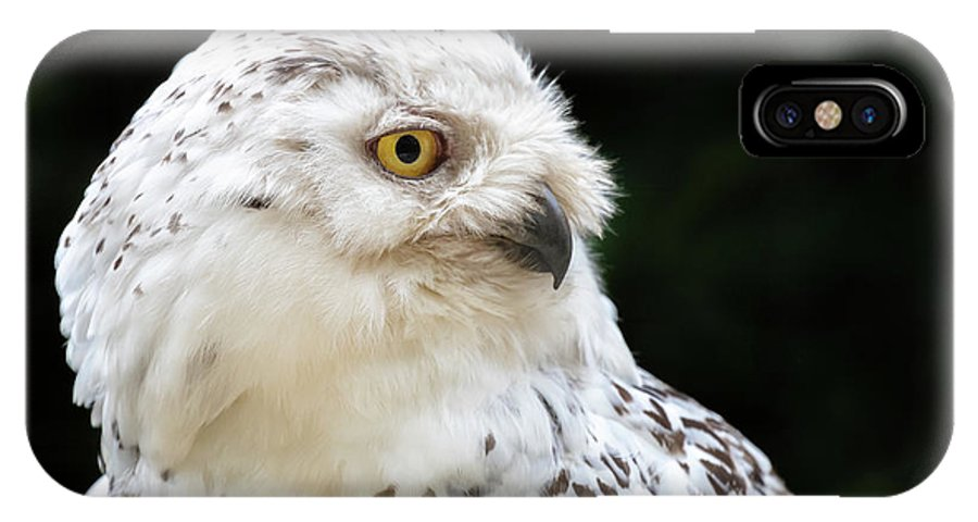 White IPhone X Case featuring the photograph Female Snowy Owl Close Up by Jane Rix
