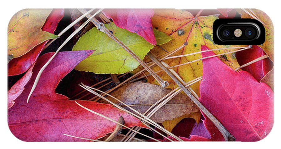 Photograph New England IPhone X Case featuring the photograph Forest Floor 1 by Michael Hubley