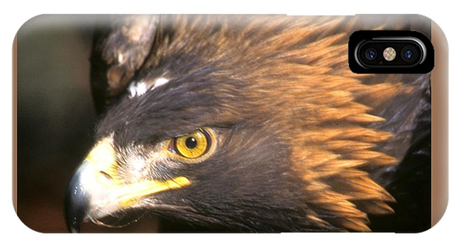 Eagles IPhone X Case featuring the photograph Golden Eagles Mascot 10 by Larry Allan