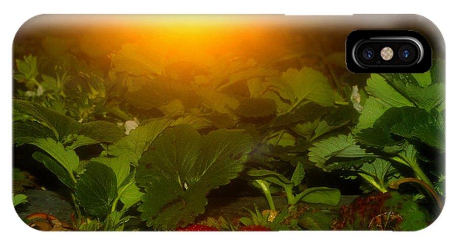 God Morning Strawberries IPhone X Case featuring the photograph Good Morning Strawberries by David Lee Thompson