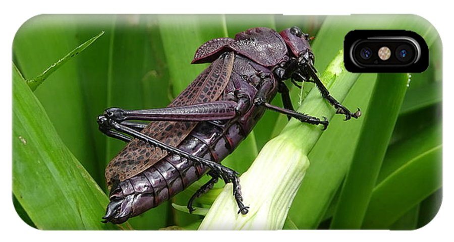 IPhone X Case featuring the photograph Grasshopper by Stanley Vreedeveld