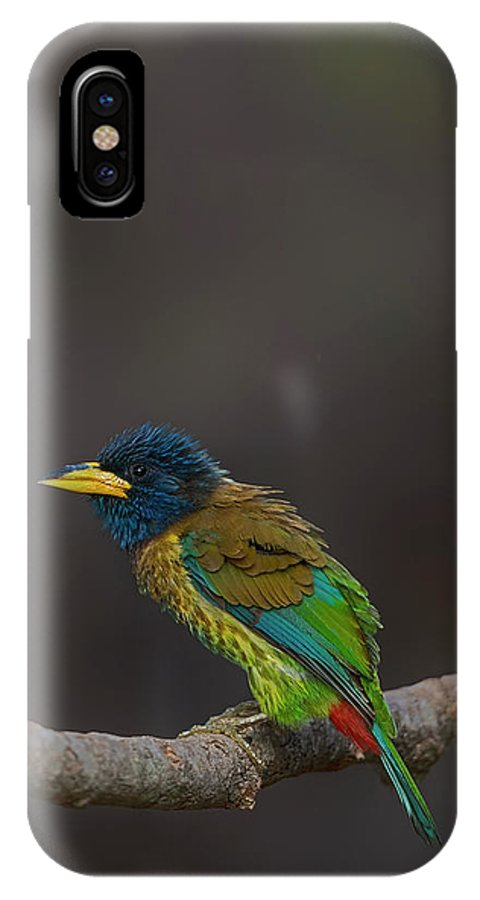 Bird Images For Print IPhone X Case featuring the photograph Great barbet by Uma Ganesh