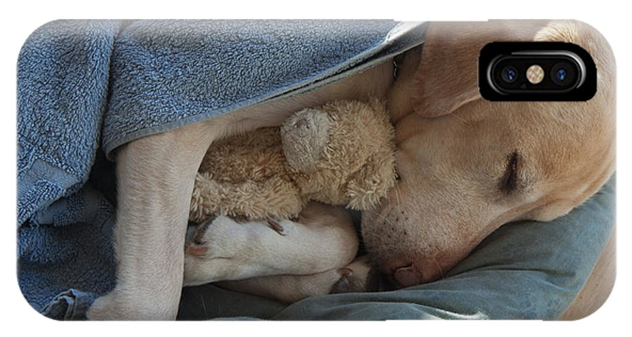 Bed IPhone X Case featuring the photograph Labrador Sleeping And Hugging A Teddy by Davidsunyol