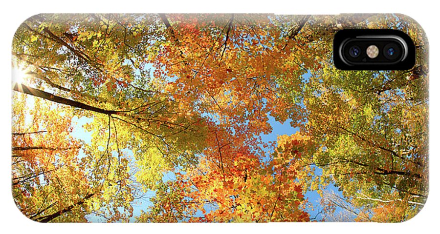 Canopy IPhone X Case featuring the photograph Langlade County Canopy by Todd Klassy